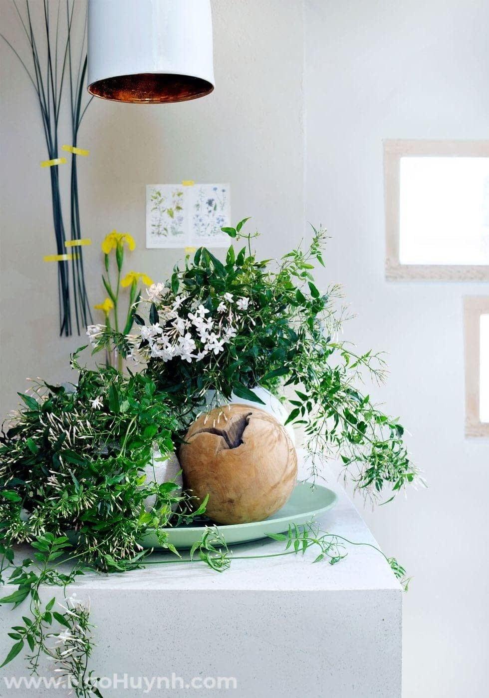 Các loại cây cảnh đặt trong phòng ngủ giúp giấc ngủ thoải mái hơn mỗi đêm